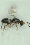 Photo of Emily Ogburn